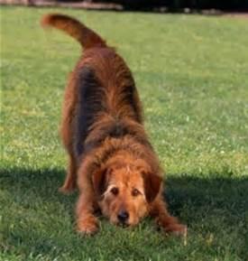 bowingdog