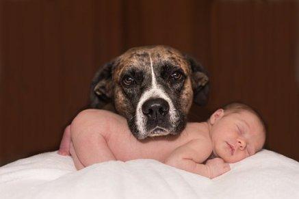 Dog&Baby.jpg