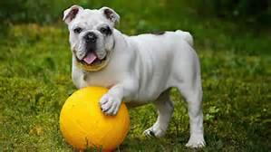 dogball3