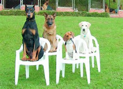DogsonChairs.png