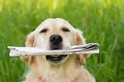 DogFetchNewspaper.jpg