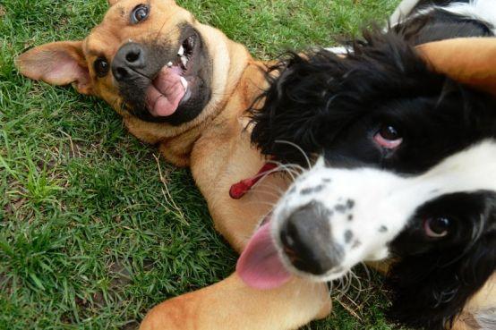 dogsplay