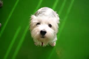 pup look
