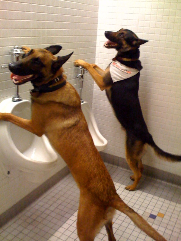 how-to-potty-train-a-dog.jpg