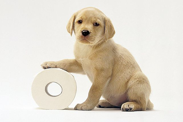 potty-training-puppy.jpg
